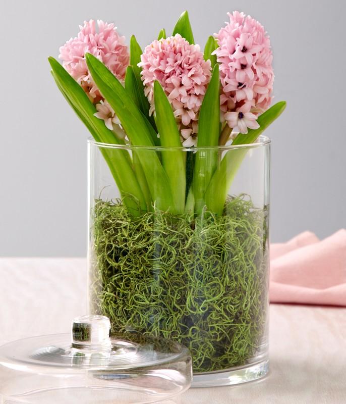 Top 20 De Idei Pentru Redecorarea Livingului: Decor: Top 10 Plante Cu Flori în Ghiveci Pentru O