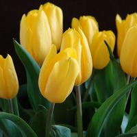 Felicitare Flori - 317