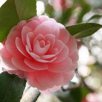 Felicitare Flori - 1076