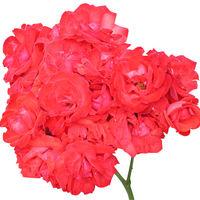 Felicitare Flori - 910