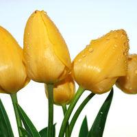 Felicitare Flori - 49