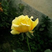Felicitare Flori - 1025