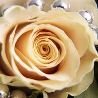 Felicitare Flori - 884