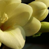 Felicitare Flori - 153