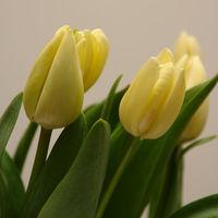 Felicitare Flori - 32