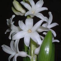 Felicitare Flori - 312