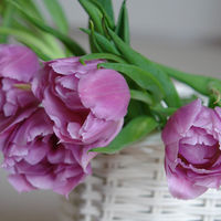 Felicitare Flori - 248