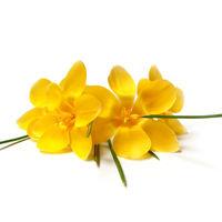 Felicitare Flori - 19