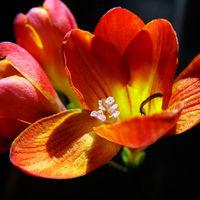 Felicitare Flori - 170