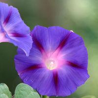 Felicitare Flori - 988
