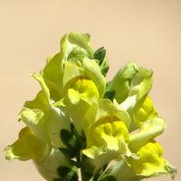 Felicitare Flori - 997