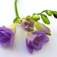Felicitare Flori - 135