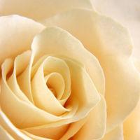Felicitare Flori - 886
