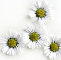 Felicitare Flori - 1086