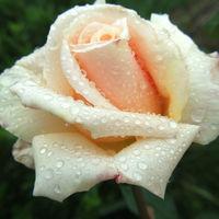 Felicitare Flori - 876