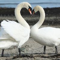 Felicitare Love - 1185