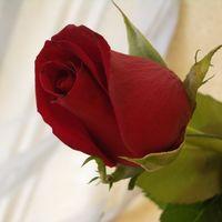 Felicitare Sf. Valentin - 1586