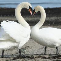 Felicitare Sf. Valentin - 1590