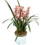 Cum ai grija de orhideea Cymbidium?