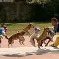 VIDEO: 13 câini sar coarda in acelasi timp