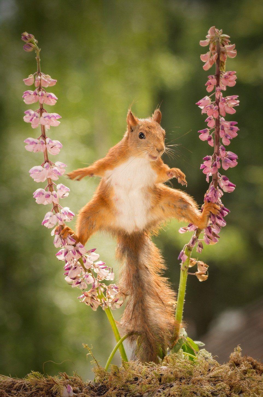 veveri?? flori