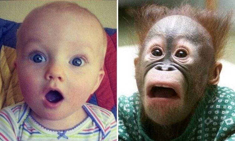 15 imagini superbe care dovedesc că animalele se comportă ca nişte copii