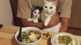 Cele mai pofticioase pisici. Un cuplu le-a pozat în ipostaze foarte amuzante