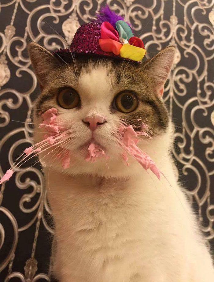 Pisica innebunita dupa tort