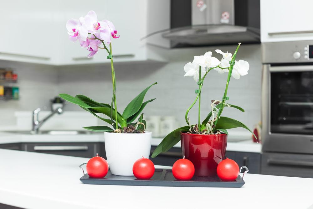 Cum să îngrijești corect orhideele
