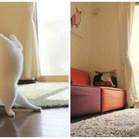 Pisica balerina