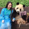 Ursul Panda îşi face selfie: Distracţie maximă! - FOTO