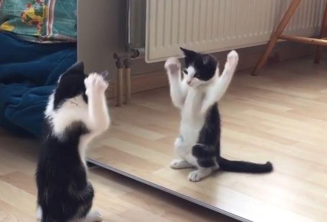 video pisica