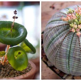 10 cele mai ciudate plante de apartament