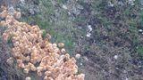 Aventura celor 1.000 de pui de o zi abandonați pe câmp: Povestea unei întâmplări neobișnuite - VIDEO