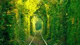 20 de tuneluri naturale care par desprinse din basme