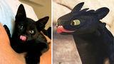 35 de pisici negre care se pot deghiza fără probleme în dragoni