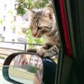 Ia-mă acasă! Ce a făcut un motan maidanez ca să fie adoptat - VIDEO