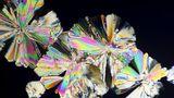 17 fotografii fascinante cu alimente văzute la microscop