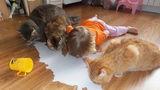 Ce se întâmplă când copiii rămân singuri în casă cu animalele. Râzi cu lacrimi!