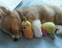 30 de animale care dorm cu jucării de pluş. Sunt adorabile!
