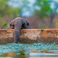 16 pui de elefant care te fac să zâmbeşti. Parcă sunt nişte copii!