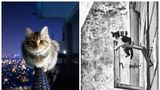 """Maestre în echilibristică. 25 de fotografii cu pisici """"la înălţime"""""""