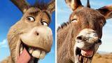 14 animale care seamănă perfect cu personajele noastre favorite din desene animate