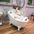 """Clanul Kardashian are concurenţă: """"Keeping Up With The Kattarshians"""", un reality show de senzaţie cu 4 pisici"""