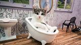 Clanul Kardashian are concurenţă: Un reality show cu pisici domină audienţele