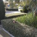 Grădinarul pus pe şotii. Pozele lui au devenit virale şi au stârnit hohote de râs!