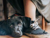 De pus în ramă: Cele mai frumoase imagini cu câini