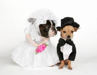 site- ul de dating pentru animale