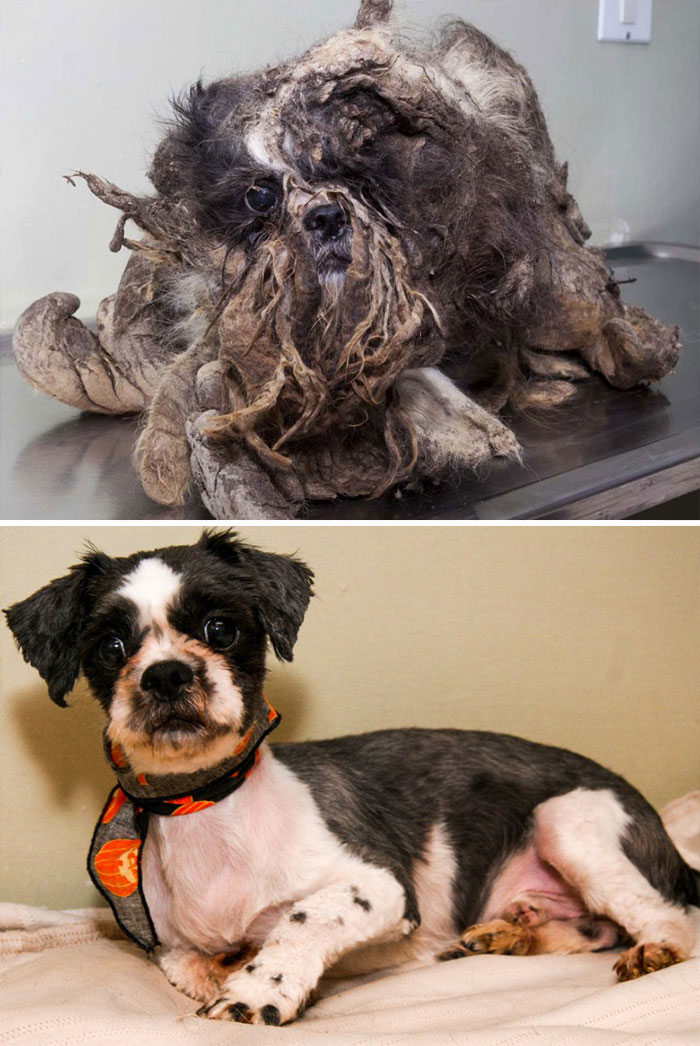 dog-makeover-before-after-rescue-35