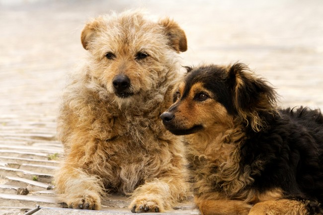 Abandoned street dogs